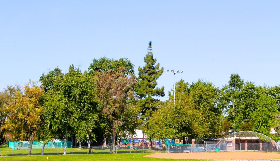 Park Playground and Trees